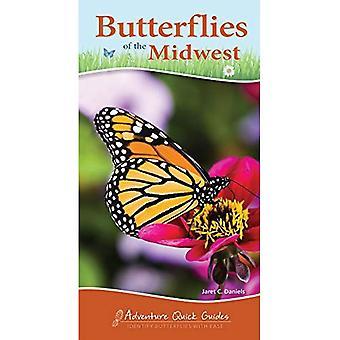 Schmetterlinge des mittleren Westens (Abenteuer Quick Guides)