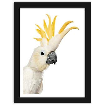 Picture In Black Frame, Sulfur-Crested Cockatoo 2