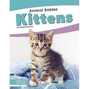 Animal Babies: Kittens