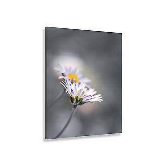 Malowanie kwiatów stokrotki na tle szarości
