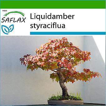 Saflax - 100 frø - Med jord - Bonsai - American Sweet Gum - Copalme d'Amérique - Storace americano - Árbol del ámbar - B - Amerikanischer Amberbaum