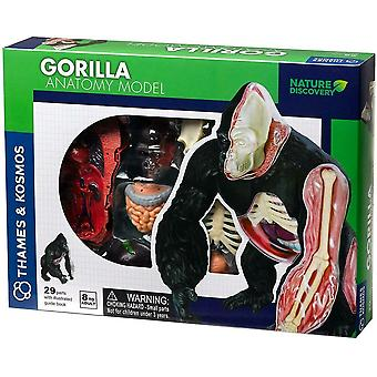 Gorilla 3D Puzzle Assembling Toy Anatomy Model Build and Learn Thames & Kosmos