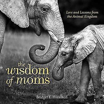 A sabedoria das mães: amor e lições do Reino Animal