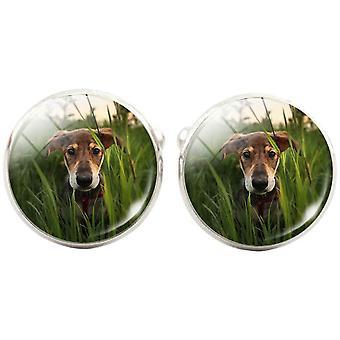 Bassin en bruine hond in de lange gras Manchetknopen-groen/bruin