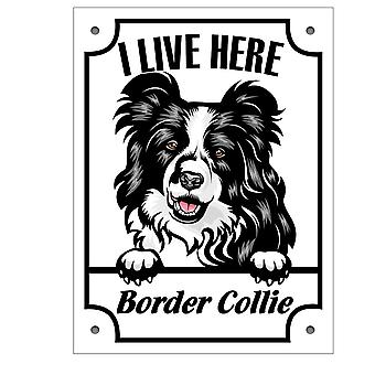 Plåtskylt  Border Collie Kikande hund skylt svart English