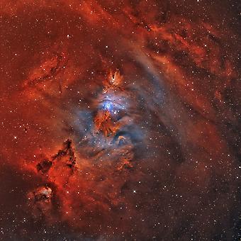 NGC 2264 туманность Рождественская елка с туманность конуса и Фокс меха Nebula Плакат Печать