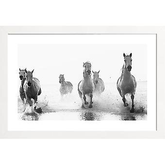 JUNIQE Print - Galopperende gennem surf - Horse Plakat i grå og hvid