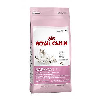 Royal Canin Babycat 34 Complete Kitten Cat Dry Food 4kg