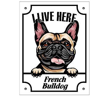 Plåtskylt French Bulldog Kikande hund skylt  English