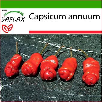 Saflax - 10 seeds - With soil - Chili - Peter Peppers Penis Chili - Piment - Peter Peppers Pénis Chili - Peperoncino Peter Peppers Penis - Pimientas de chile Peter en forma de pene - Chili - Peter Peppers Penis Chili