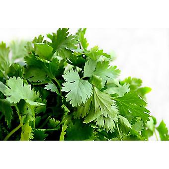 Cilantro Leaves (chinese Parsley)-( 5lb )