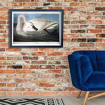 John James Audubon - cisne cartel impresión Giclee
