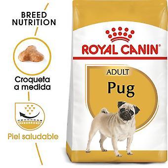 Royal Canin Pug Adult (Dogs , Dog Food , Dry Food)