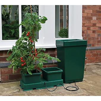 Easy To Grow Kit Green Home Growing Gardening