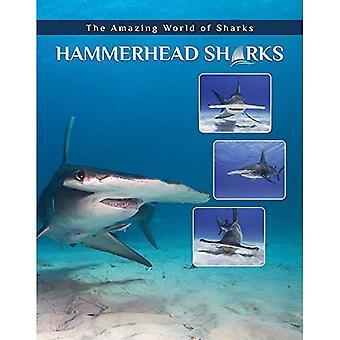Hamerhaaien (Amazing wereld van haaien)