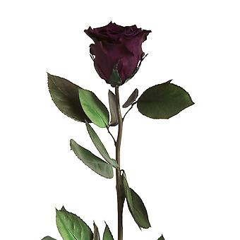 Eternal Rose Violet with stem durable 3 years 45-50 cm