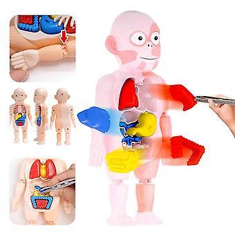 Vzdělávací učení diy sestavené hračky sady tělové varhany lékařské výukové nástroje montessori 3d puzzle lidské tělo anatomie model hračka