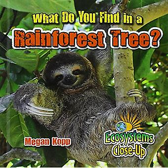What Do You Find in a Rainforest Tree? by Megan Kopp - 9780778722618