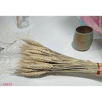 Bulrush Natural Dried Flowers Small Pampas Grass - Phragmites DIY Artificial Flowers Plants For Home Wedding Decoration
