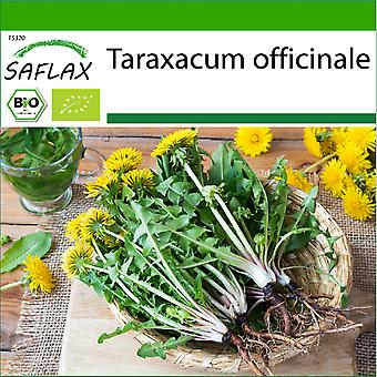 Saflax - 400 Samen - Mit Erde - Bio - Löwenzahn - BIO - Pissenlit - BIO - Tarassaco o dente di leone - Ecol'gico - Diente de leén - BIO - Löwenzahn