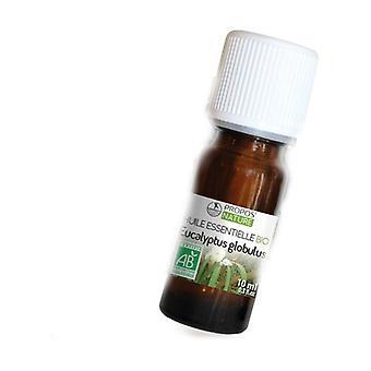 Euca globulus essential oil 10 ml of essential oil