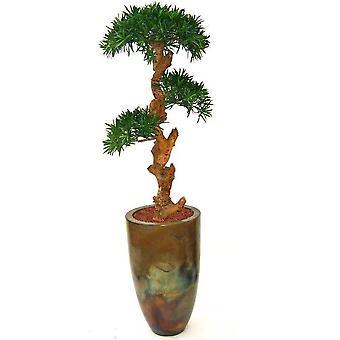 Artificial Podocarpus Bonsai 150cm