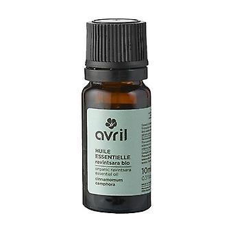 Organic Ravintsara essential oil 10 ml of essential oil