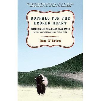 Buffle pour le cœur brisé: restaurer la vie dans un Ranch des collines noires