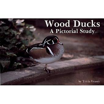 Holz-Enten: Eine bildhafte Studie