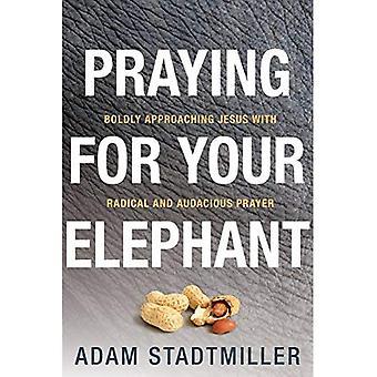 Rukoilla elefanttisi: rohkeasti lähestytte Jeesusta radikaalisti ja rohkea rukous