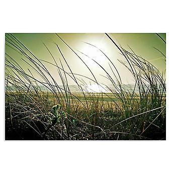 Deco Panel, Coastal grass