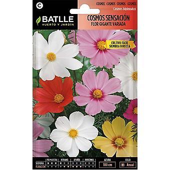 Batlle Cosmos Sensation Big Flower (Garden , Gardening , Seeds)
