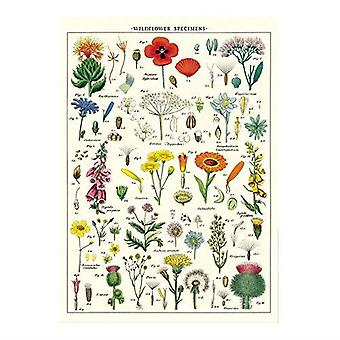 Cavallini Wild Flowers Wrapping Sheet Craft Poster