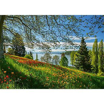 Schmidt Spring Avenue, Mainau  Jigsaw Puzzle (1000 Pieces)