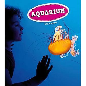Akwarium (wycieczki, Let's Go!)