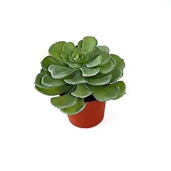 Artificiale Echeveria succulento 16cm in vaso