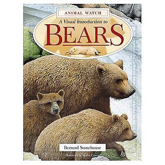 En visuell introduktion till björnar