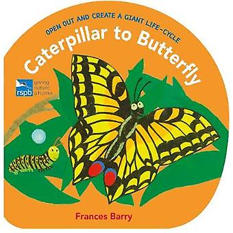 Caterpillar to Butterfly - Open Out and Create a Giant Life-Cycle by F