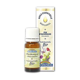 Essential oil Pine Sylvestre d'Auvergne Bio 10 ml of essential oil