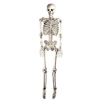 """Szkielet 60"""" wiszące"""