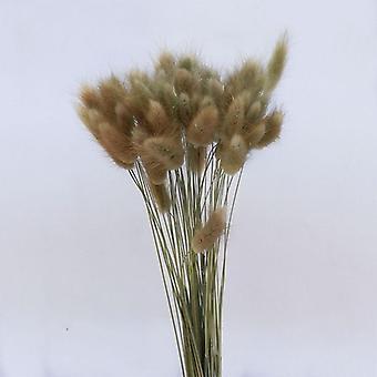 tørket naturlig ekte blomst fargerik kanin hale gress bunter