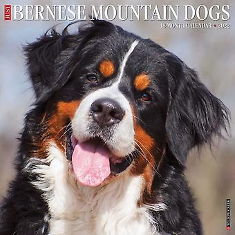 Just Bernese Mountain Dog 2022 Wall Calendar Dog Breed by Willow Creek Press