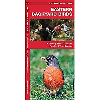 Eastern Backyard Birds: An Introduction to Familiar Urban Species (Pocket Naturalist)