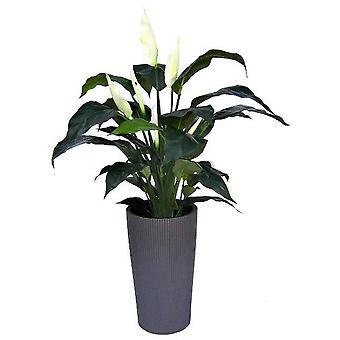 Spathiphyllum Deluxe artificiale 80cm