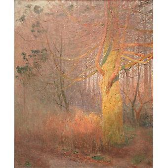 شجرة في الشمس،إميل كلوز، 60x50cm