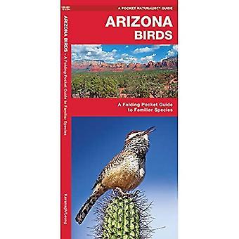 Arizona Birds (Pocket Naturalist)