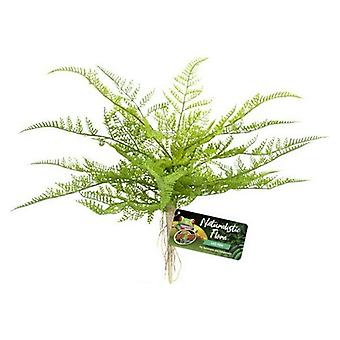 Zoo Med Naturalistic Flora Lace Fern - 1 count