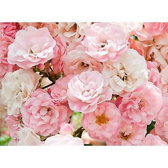 Behang muurschildering roze rozen II