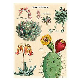 Cavallini Cacti Succulents 2 Wrapping Paper Poster