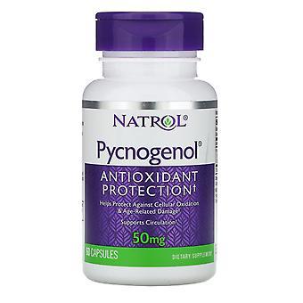 Natrol, Pycnogenol, 50 mg , 60 Kapslar